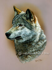 Wolf Head Study Limited Edition Print by Robert J. May