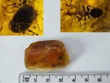 Bursztyn inkluzja , Amber  fossils, (8344)