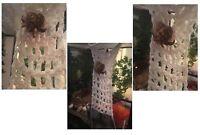 "Hermit Crab Food - Climbing Net Ladder Hammock or Wall 9x4"" 100% Natural Cotton"