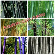 20 Seeds x ( Black + Green  + Golden + Brown  + Purple + White Bamboo ) Combo