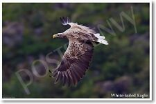 White-tailed Eagle - NEW Animal Wildlife POSTER