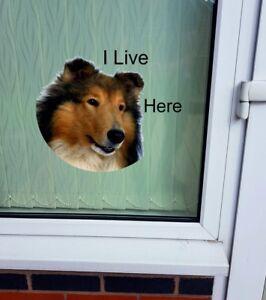 "Collie dog ""I LIVE HERE"" Window/Door sticker Decal"