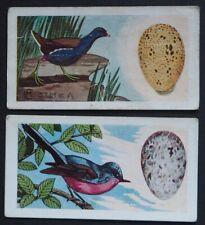 C.B.T. GAYCON 1960 ORIGINAL TRADE CARD  BRITISH BIRDS & THEIR EGGS  No's 3 & 34