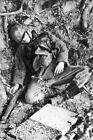 WW2 - Soldat allemand tué à Sainte-Mère-Eglise le 6 juin 1944
