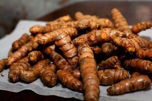 Fresh Organic Turmeric Roots 1Kg - Matured Turmeric Roots - Curcumi Roots 1Kg
