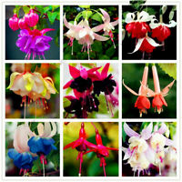 100Pcs Fuchsia Flower Seeds Lantern Flowers Mixed Viable Plants For Your Home