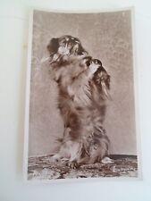 PEKINESE DOG - Retro Vintage Real Photo Postcard  §B1738