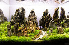 Ohko Dragon Stone -- -- rock ADA aquarium tropical fish plant shrimp Driftwood