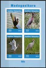 Madagascar 2019 MNH Ibis 4v IMPF M/S Water Birds Stamps