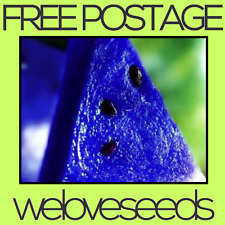 LOCAL AUSSIE STOCK - Blue Watermelon, Fruit Tree Plant Seeds ~25x FREE SHIPPING