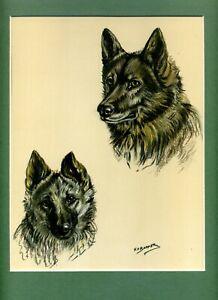 ~ Elkhound ~ Colour Print by K F Barker  Genuine Vintage 1938