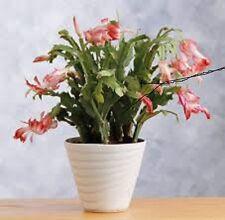 POTTING SOIL FOR EASTER/X-MAS CACTUS/PLANTS ORGANIC 20 Qt  PsNature