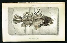 1835 Common Perch, Freshwater Fish, Hand-Colored Antique Engraving - Jardine