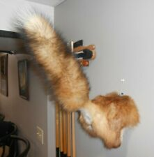 Red Fox Taxidermy Butt Rump Mount Tail Up Cabin Decor Gift