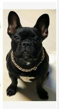 Pet Puppy Dog Chain Collar Punk Gold Cat Wide Medium Punk Necklace UK seller