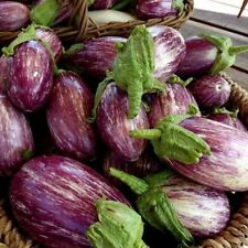 10 AUBERGINEN LISTA DE GANDIA Zweifarbig  SÄMEREIEN GEMÜSE   Samen  Tomaten