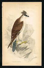 Crested Spizaetus, Ornate Hawk-Eagle, Hand-Colored Plate - Jardine 1840