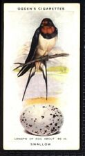 Ogden's British Birds and Their Eggs 1939 - Swallow No. 41