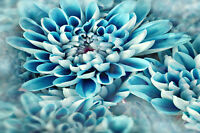 STUNNING ABSTRACT BLUE FLOWERS CANVAS #757 QUALITY FLORAL FRAMED WALL ART A1