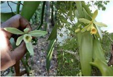 Plantes, graines et bulbes terreaux moyens
