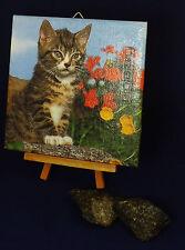 Deko-Fliese,  Bildfliese, Wandfliese mit Serviettentechnik Katze Kätzchen (035)