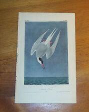 Birds of America. Audubon. Arctic Tern. 1st ed. 1840.