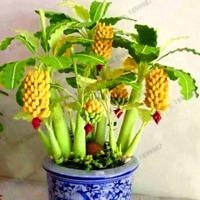 100 PCS Seeds Banana Bonsai Dwarf Fruit Trees Perennial Plants Garden 2019 Rare