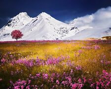 Photograph of Alps (8X10) New Landscape Photo Print Mountains Flowers Picture
