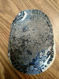 """Real Turtle Shells  6"""" long  red eared slider  Carapace"""