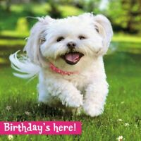 Avanti Birthday's Here Puppy Birthday Greeting Card Glitter Flittered Cards