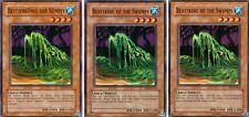 2x Beastking of the Swamps TP5-EN014 + 1x Bestienkönig Der Sümpfe - TP5-DE014