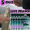 5 Whiting Rig Sze 4 Hook Paternoster Flasher Lure Rig Bait Fishing 30lb Leader