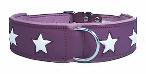 Purple Leather Dog Collar White Star Staffy Staffordshire Bull Terrier Collar