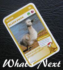 Woolworths<AUSSIE ANIMALS><Series 2 Baby Wildlife>CARD 35/36 WATER Black Swan