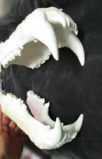 Huge reproduction polar bear teeth jaws giant fangs cast  REPLICA