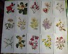 15 Ancienne Affiches Scolaire Botanique 1972 Camellia Japonica,Magnolia