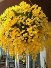 Usa Seller 200 Seeds Yellow Hanging Orchid Plant Garden Plants