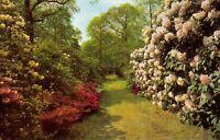 Vintage Hampshire Postcard, A Woodland Walk, Exbury Gardens, Flowers HR6