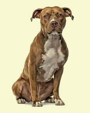 Artified Pets Sun Dog: American Staffordshire Terrier : Artified Pets Dog.