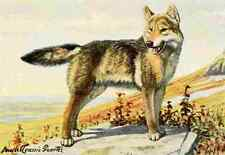 A4 Foto fuertes Louis Agassiz 1920 Wolf impreso Poster