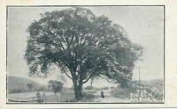 HAMBURG NJ - The Big Elm - udb (pre 1908)