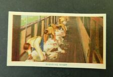 c1940 Hoadleys Trade Card Birth of a Nation #13 Shearing Sheep  Australiana  VGC