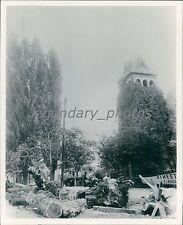 Fallen Trees in Salt Lake City Historical Scene Original News Service Photo