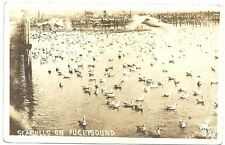 Otto T Frasch Real Photo Postcard of Seagulls on Puget Sound c1910-15