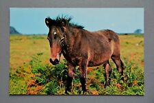 R&L Postcard: Dartmoor Pony Horse, Devon, NPO