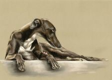 GALGO  Windhund  XXL   LEINWAND  Druck   # 1