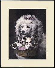 POODLE CARRYING A BASKET OF KITTENS LOVELY DOG PRINT MOUNTED READY TO FRAME