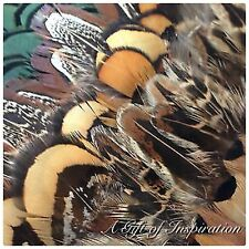 Mix of 25 Natural Pheasant Feathers 5 of Each Colour DIY Craft Jewelery