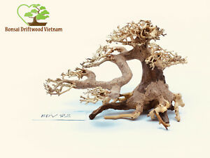 Bonsai Driftwood Tree Decoration For Freshwater Aquariums Shrimp Fish - BDV82