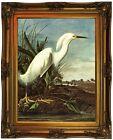 Audubon SNOWY EGRET Wood Framed Canvas Print Repro 18x24
